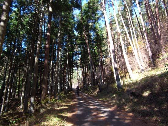 三つ峠の林